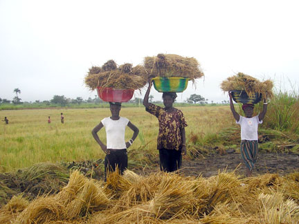 A Flourishing and Productive Society Through Agriculture