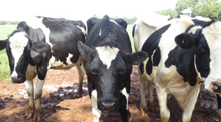 Baraka Farm Helps Revolutionize Dairy Industry in East Africa