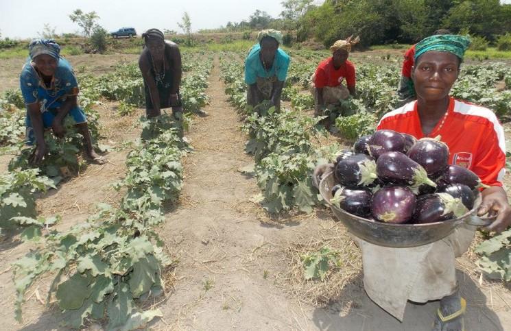 Feeding Africa