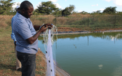 Kabwata Fish Farming Projects Expands Generating More Revenue for Zambia's Orphans