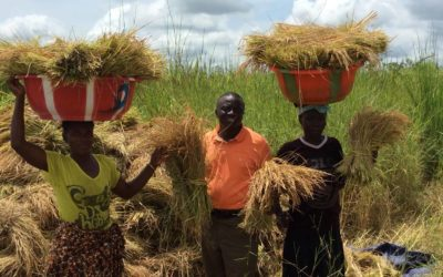 Harvest Time is Now in sub-Saharan Africa